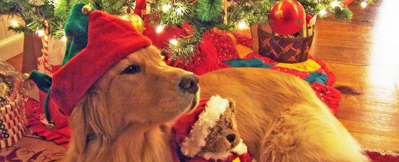 Santa Ellie