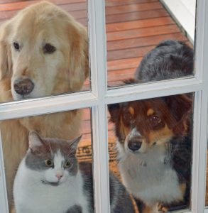 Ellie, Fin, and Wrigley at the Front Door